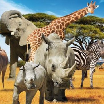 Safari Parc de Peaugres